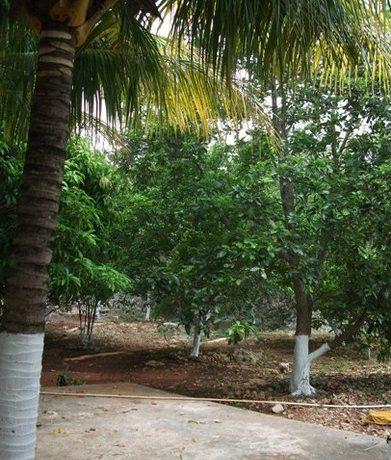 quintaparking-quinta-for-sale-yucatan-Icon1