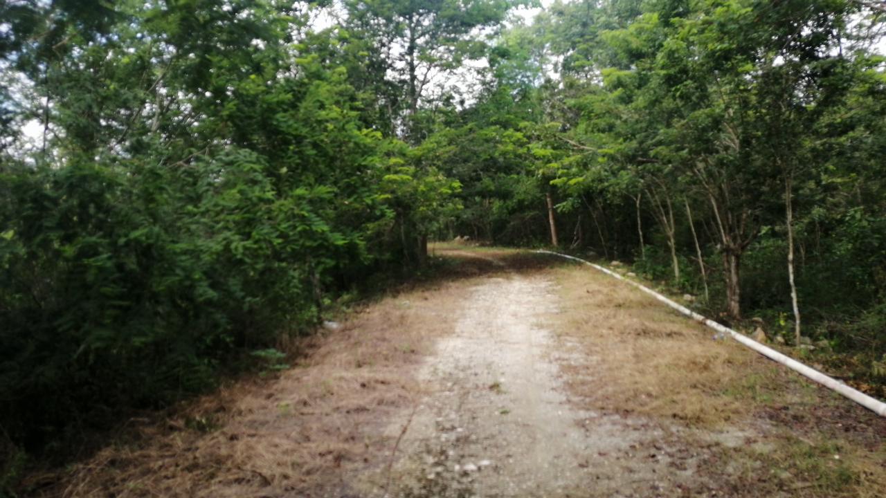 Hectárea en Venta en Anillo de Cenotes