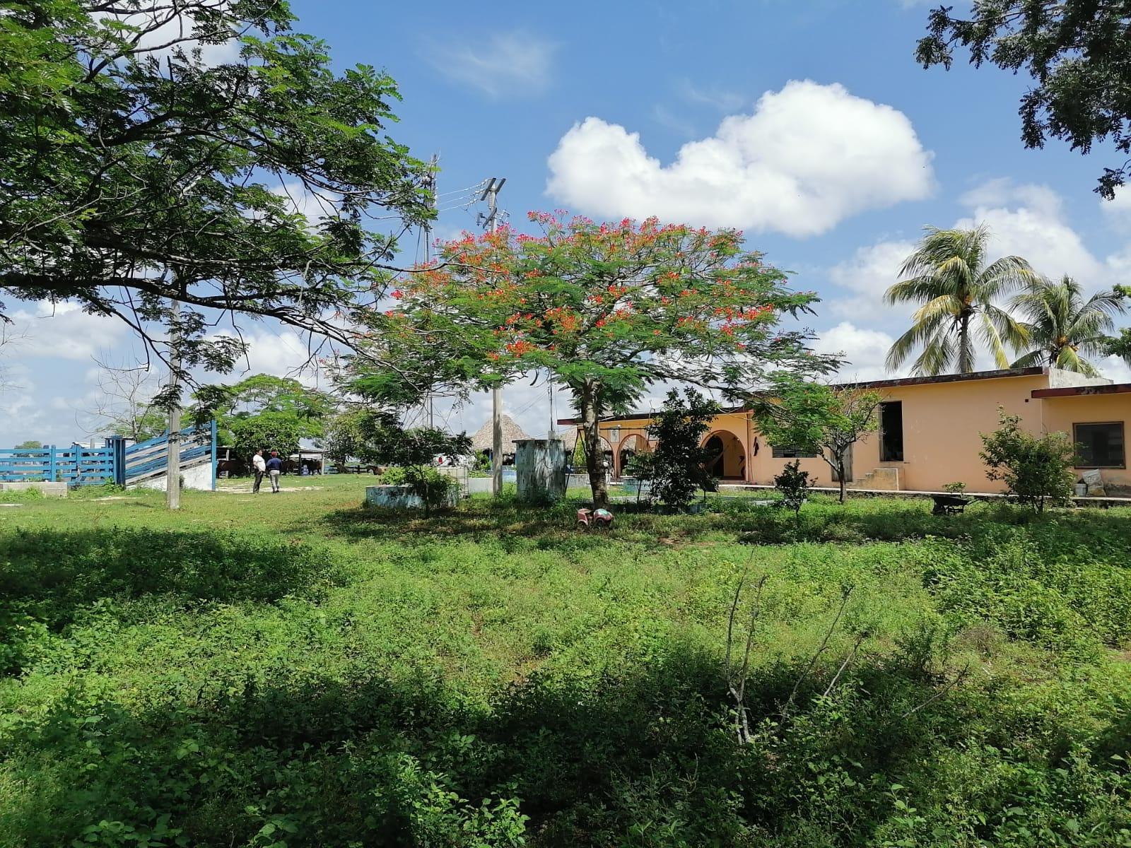 Rancho de 250 Hectáreas en Venta en Buctzotz Yucatán